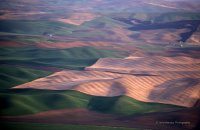 """ Early Morning Light on the Palouse """