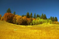 """ Fall - High Meadow """