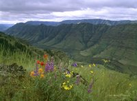 """ Imnaha River Canyon Wildflowers """