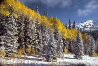 """ Late Fall - Grand Targhee """